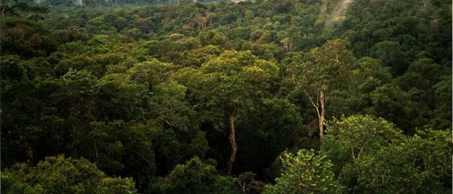 Amazon rainforest: Phil P Harris via Wikimedia Commons.