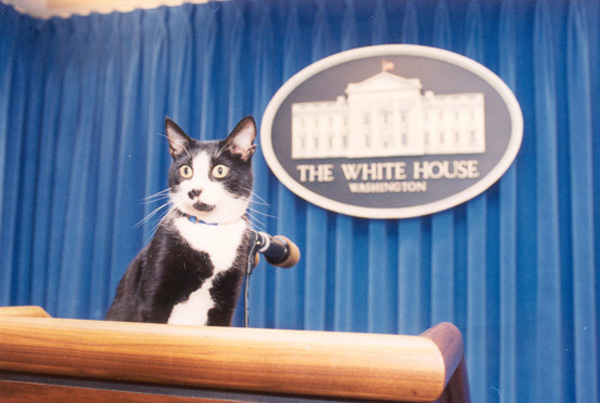 The Clinton's cat, Socks, in the White House Press Briefing Room.